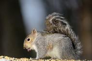 松鼠图片(10张)