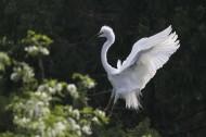 高贵的白鹭图片(12张)