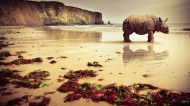强壮的犀牛图片(8张)