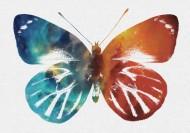 彩色蝴蝶剪影图片(9张)