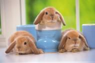软萌可爱的小兔子图片(15张)