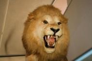 博物馆动物标本图片(13张)