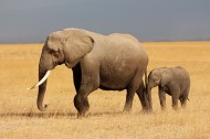 威武的大象动物图片(15张)