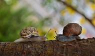 爬行的蜗牛图片(11张)