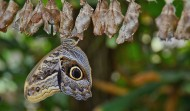 未化蝶的茧图片(15张)