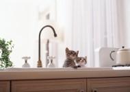 家有顽皮小猫图片(36张)