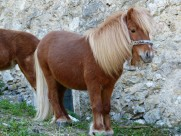 矮马、小马图片(15张)