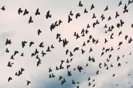黑漆漆的乌鸦图片(10张)