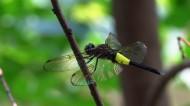 蜻蜓图片(8张)