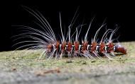 毛毛虫微距图片(6张)