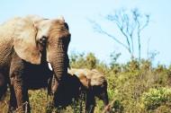 丛林中的大象图片(14张)