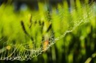 带露珠的蜘蛛网图片(9张)