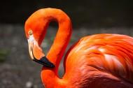 傲娇的火烈鸟图片(15张)