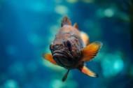 不同种类的鱼图片(13张)