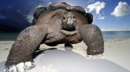 陆栖性动物乌龟图片(11张)