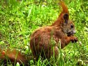 红褐色的小松鼠图片(15张)