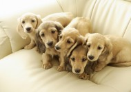 宠物狗图片(57张)