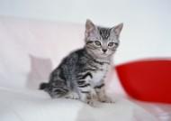 可爱小猫图片(9张)