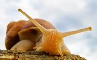 可爱的蜗牛图片(14张)