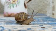 蜗牛高清图片(13张)