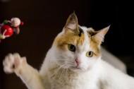 扭头张望的猫咪图片(10张)