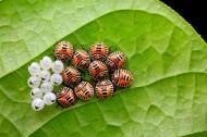 各种昆虫微距图片(11张)