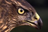 老鹰图片(6张)