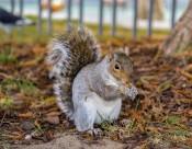 贪吃的小松鼠图片(9张)