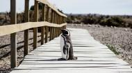 聪明可爱的企鹅图片(7张)