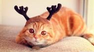 搞怪猫咪图片(15张)