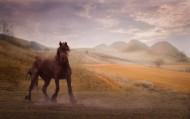 一匹站着的马图片(13张)