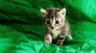 超萌小奶猫图片(6张)