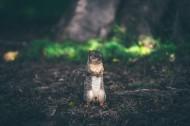 呆萌可爱的小松鼠图片(14张)