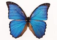 蝴蝶图片(20张)