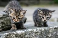 可爱的猫咪图片(11张)
