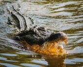 凶残的鳄鱼图片(10张)