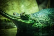冷血的鳄鱼图片(12张)