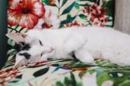 躺着沙发上的猫咪图片(11张)