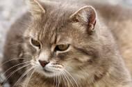 扭头张望的猫图片(10张)