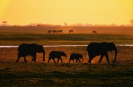 夕阳大象剪影图片(6张)