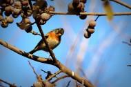 树枝上的小鸟图片(8张)