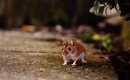 正在吃花生的老鼠图片(15张)