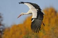 白鹤图片(8张)