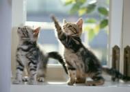 家庭宠物可爱猫咪图片(74张)