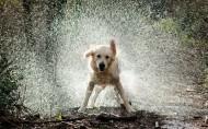 水中嬉戏的狗狗图片(10张)