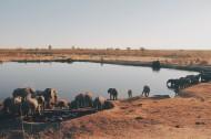 聚在一起的象群图片(10张)