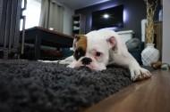 可爱的宠物狗图片(14张)
