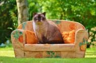 乖巧可爱的猫图片(10张)