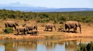体形庞大的大象图片(10张)