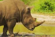 犀牛图片(4张)